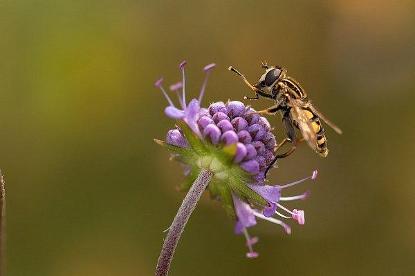 Najczęstsze wiosenne alergeny